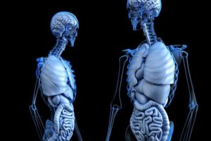 lungs are part of the detoxification system