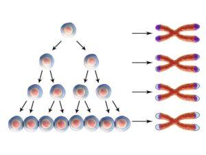 telomere strands