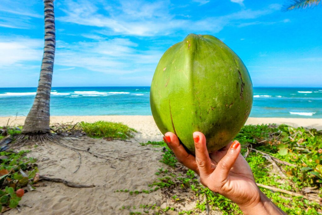 What are Virgin Coconut Oil Health Benefits?