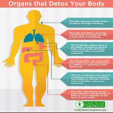 organs that detoxify the body