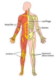 The curcumins in turmeric are a powerful anti inflammatory
