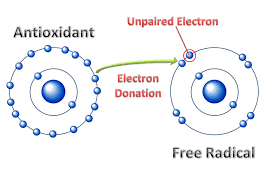 antioxidants and free radical diagram