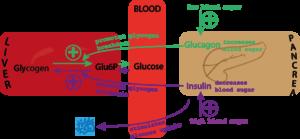 blood sugar diagram
