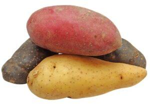 raw whole potato