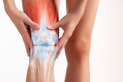 knee cap and ligiments