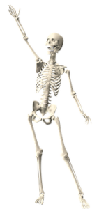 calcium is crucial to strong bones