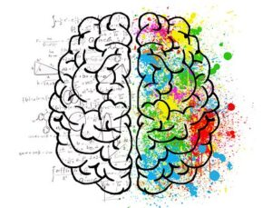 left and right sides of a brain