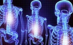 skeleton and backbone