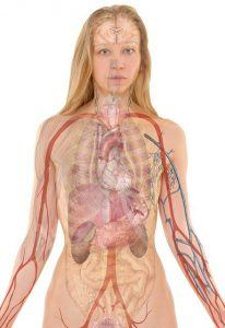detoxification system of the human body