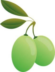 whole olive leaf